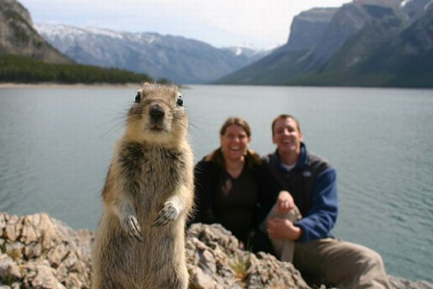 30 Hilarious Animal Photobombs Caught On Camera Prove We Are Not Alone In Our Search For The Ultimate Selfie. #26 Is Definitely My Favorite!