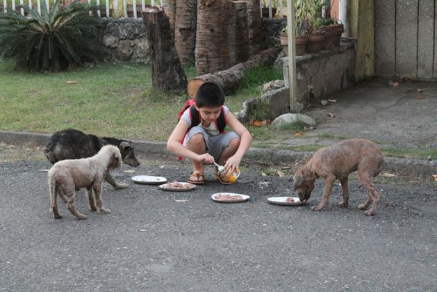 What This 9-Year-Old Boy Was Willing To Do For The Stray Animals In His Neighborhood Makes Me Teary-Eyed. This Kid Is Awesome!