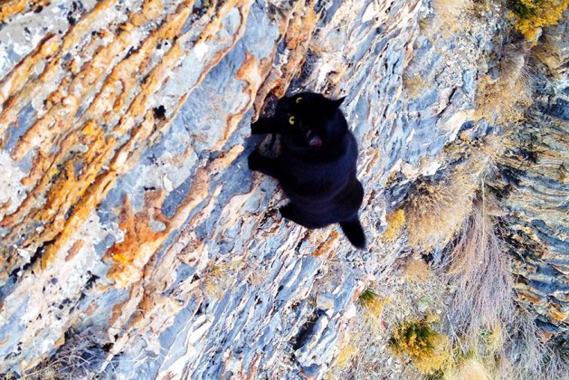 Fearless Cat and Owner Are Inseparable Mountain Climbing Team. You'll Never Believe Some Of The Perilous Rock Climbs This Duo Has Made!