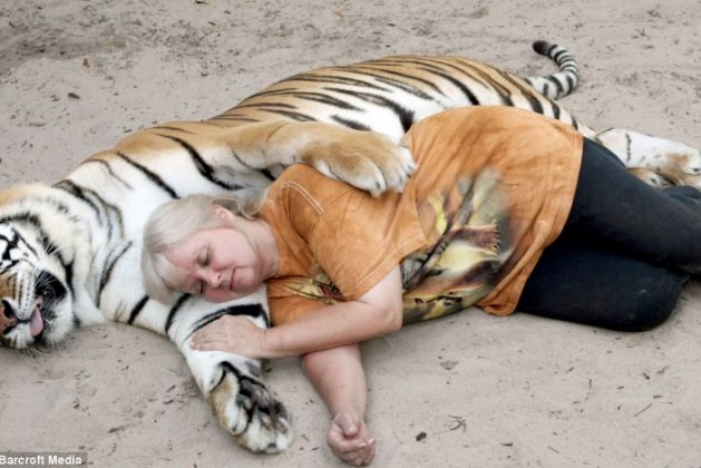 2 Fully Grown Bengal Tigers Live At Home With This Brave Woman Who Raises Them Well With Lots Of Hugs And Kisses… Huh?!