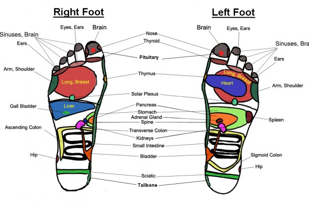 What is Reflexology and What Can It Do for Your Health?